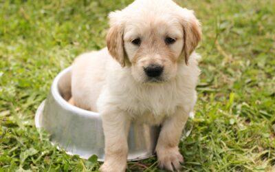 Acana hundefoder – perfekt til hunde med sensitive maver