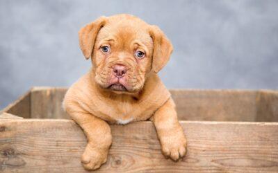 Sådan får du en sundere og gladere hund med Acana hundefoder