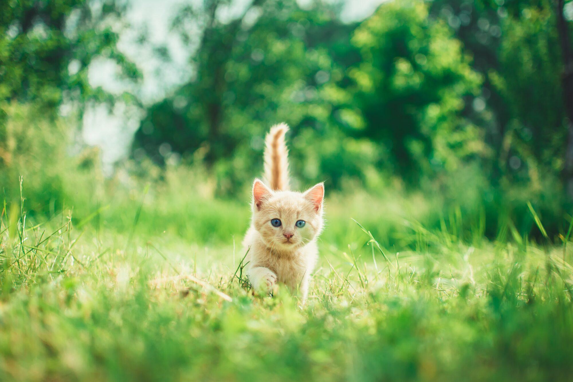 Dyrlæger i Herning du trygt kan overlade dit kæledyr til