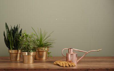 Sådan kommer du godt i gang med indoor gardening